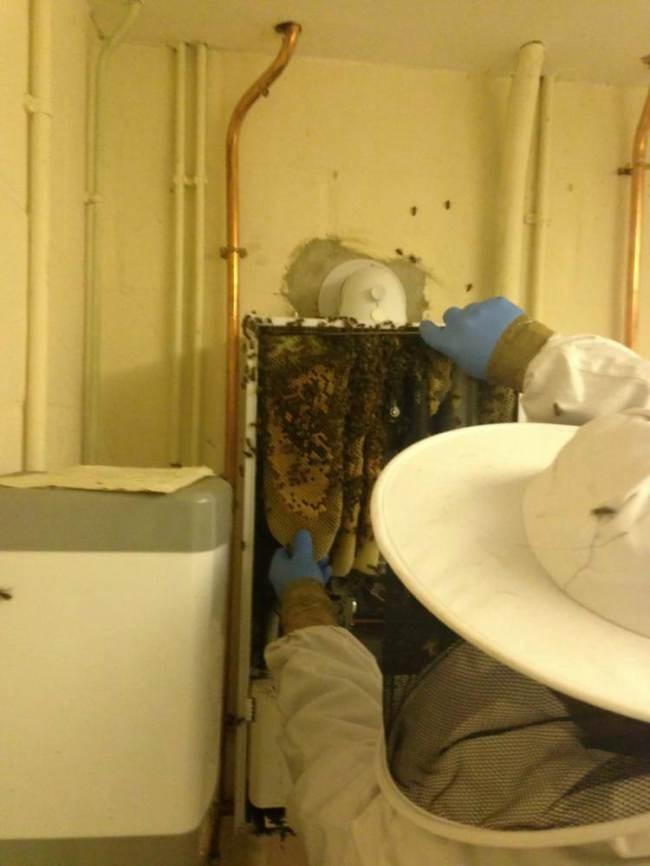 Gas engineers, boiler cover